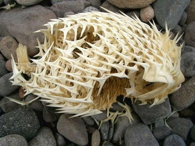 Kostur ove ribe je baš zastrašujuć