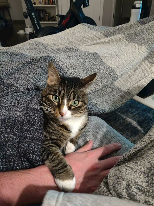 Išla sam uhvatit svog dečka za ruku, ali isriječila mi se moja mačka s pogledom kao da govori ON JE SAD MOJ!