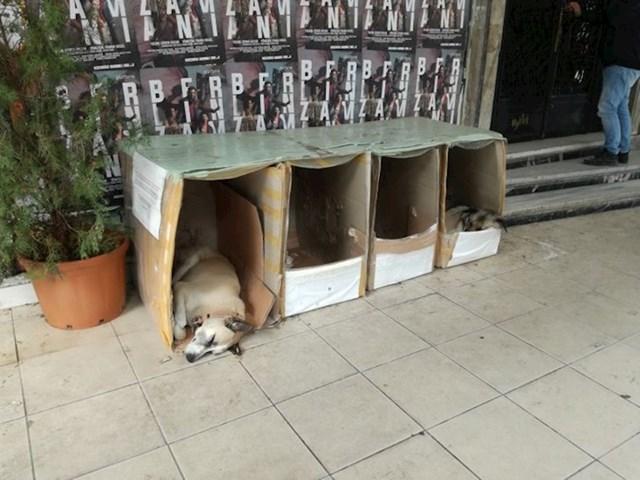 Ljubazni gradski stanovnici grade kuće za pse lutalice.