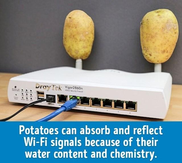 Krumpiri mogu pojačati wi fi signal zbog svojeg sastava