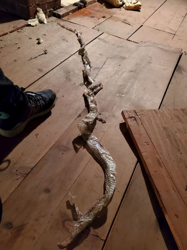 Prvog dana lockdowna ovo je pronašao na tavanu