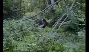 Širi se snimka iz šume u Lici: Što medvjed napravi kad vidi Ličanina?