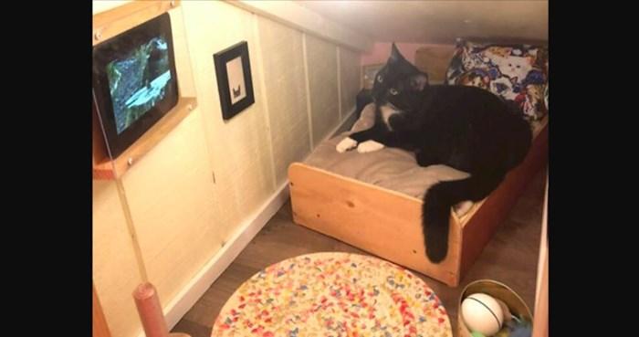 Upoznajte mačku koja ima svoju sobu s krevetom, slikama na zidu i vlastitim televizorom
