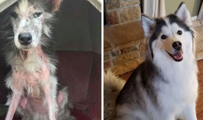 Ljudi dijele fotke svojih pasa prije i nakon udomljavanja. Genijalne su!