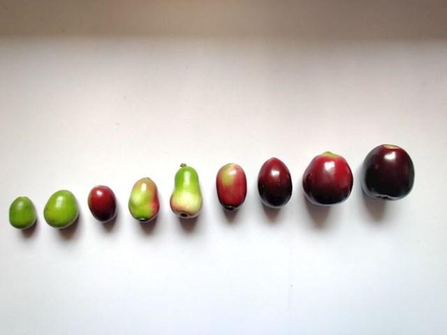 Ružina vodena jabuka, drvo podrijetlom iz jugoistočne Azije