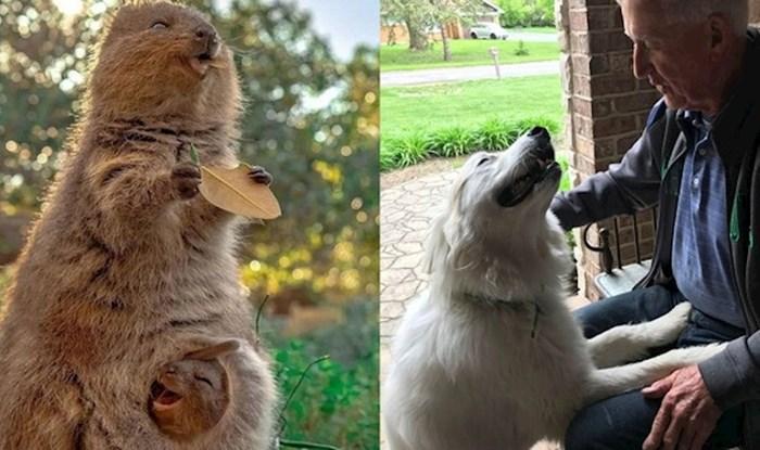 17 životinja kojima riječi nisu potrebne kako bi izrazile svoje emocije
