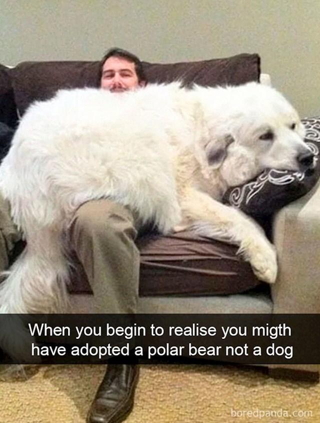 """""""Ono kad pomisliš da si možda udomio polarnog medvjeda umjesto psa"""""""