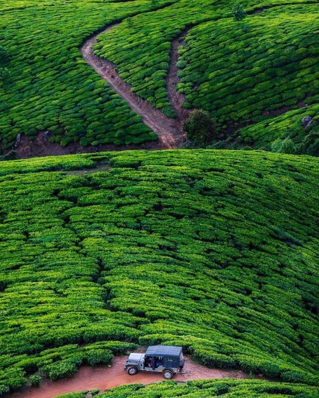 Plantaža čaja u Kolukkumalai, Indija