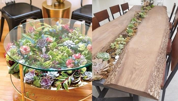 Ljudi pretvaraju svoje stolove u prekrasne vrtove sa sukulentima