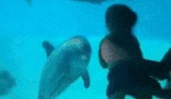 Tata je približio dijete akvariju u kojem je bio dupin, njegova reakcija je nevjerojatna