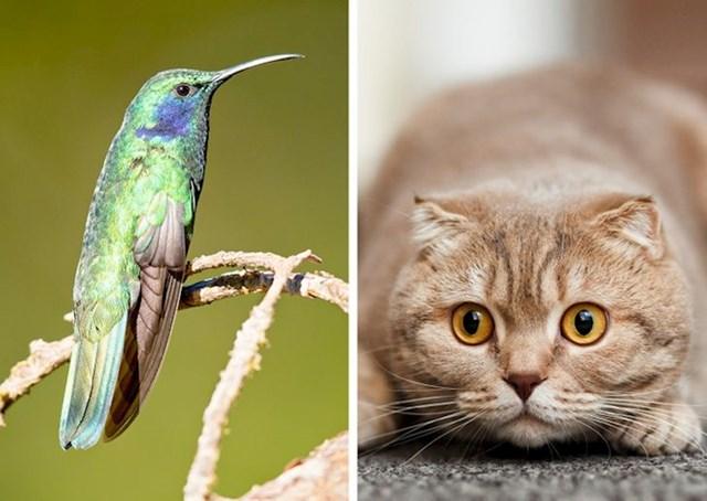 Mačke su krive za izumiranje najmanje 33 endemske vrste ptica
