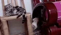 Mački nije bilo jasno tko ju povlači za rep, ovo je preslatko