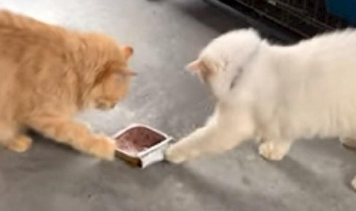 Ova mačke ne vole dijeliti svoju hranu, pogledajte njihovu preslatku borbu za konzervu