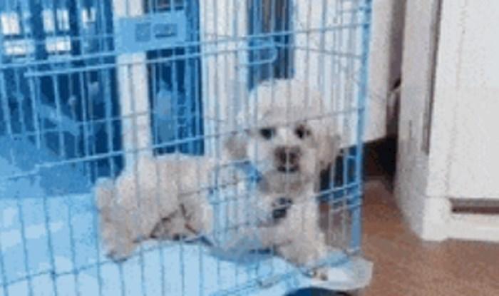 Vlasnik je naučio svog psa kako da se pobrine sam za sebe, ovo je presmiješno