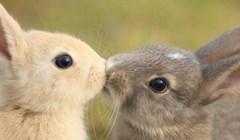 I životinje znaju izmjenjivati nježnosti: Ovo je doslovno nešto najslađe što ćete vidjeti danas
