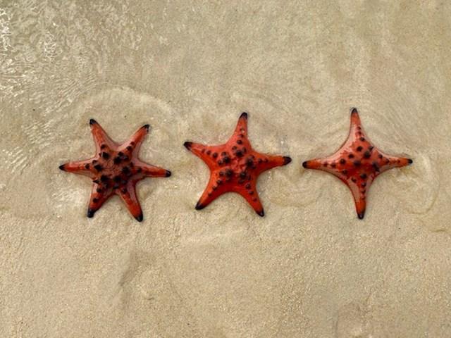 Različite morske zvijezde