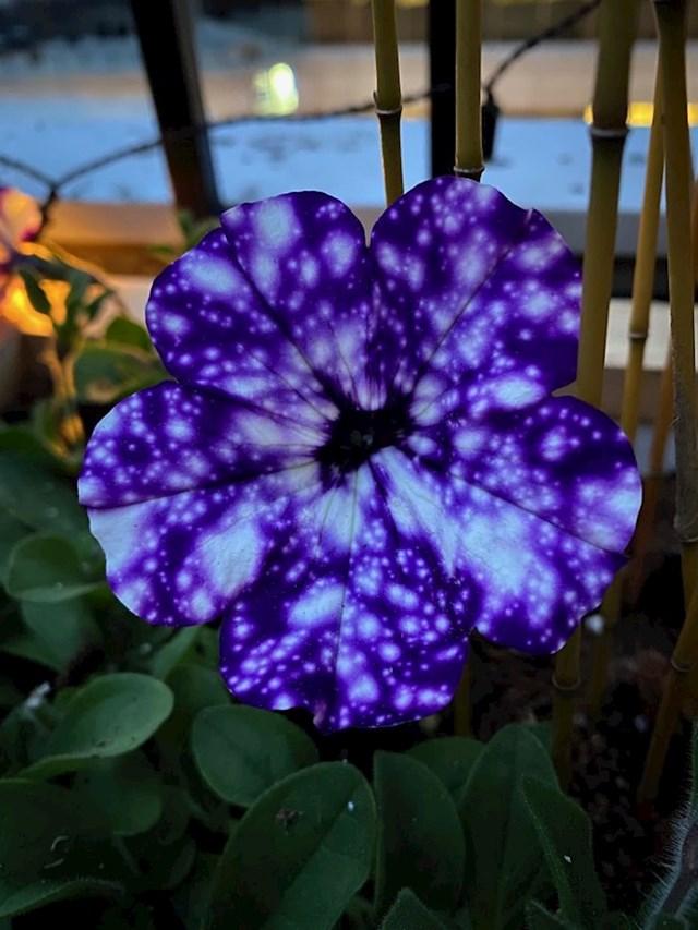 Svemir na cvijetu