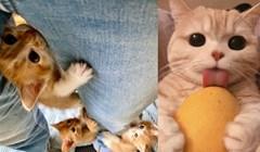 Fotke preslatkih maca koje znaju kako osvojiti sva srca