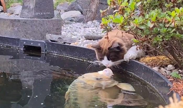 Ova mačka se sprijateljila s ribom, vlasnica je snimila nevjerojatnu scenu