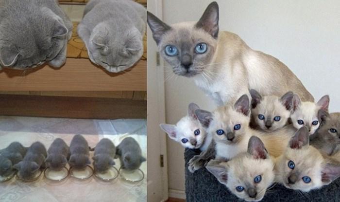 23 mačke i njihove slatke bebice