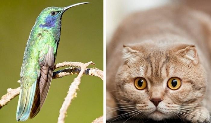 10 činjenica o životinjama koje sigurno niste znali