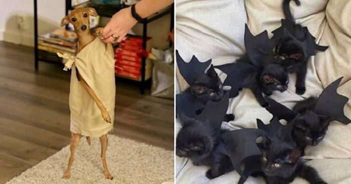 30 kućnih ljubimaca koji su totalno rasturili ovogodišnji Halloween