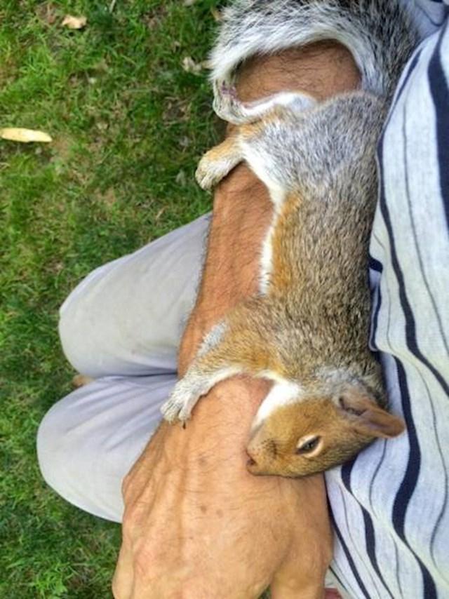 Ova vjeverica se savršeno stopila sa rukom