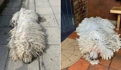 Ovaj pas izgleda kao krpa za pod, vlasnica dijeli urnebesne slike na svom Instagramu