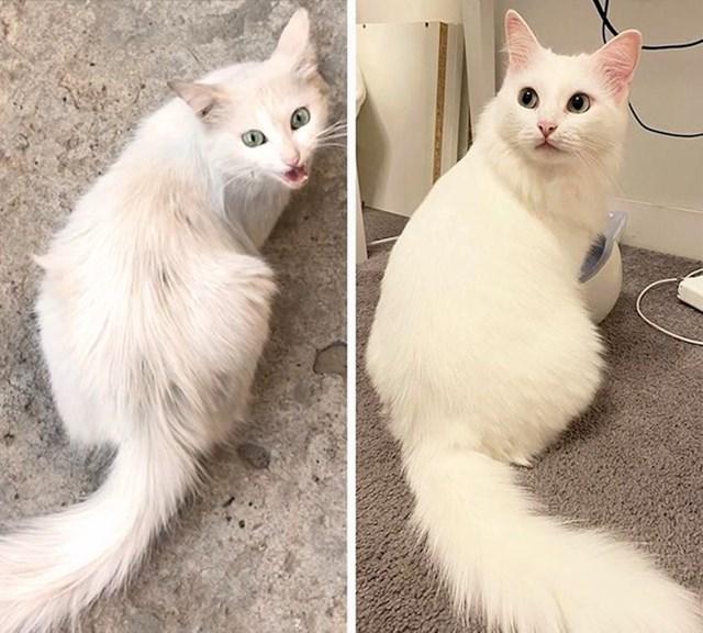 """""""Spasio sam ovu mačku s ulice prije godinu dana"""""""