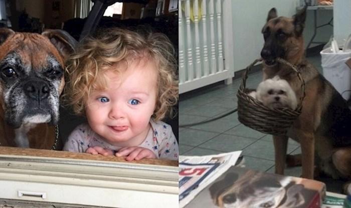 Fotke koje nas podsjećaju da su psi uistinu čovjekov najbolji prijatelj