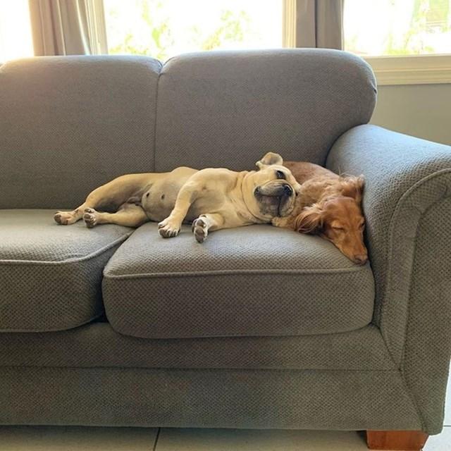 """""""Bili su nerazdvojni u skloništu pa sam umjesto jednog, udomio dva psa"""""""