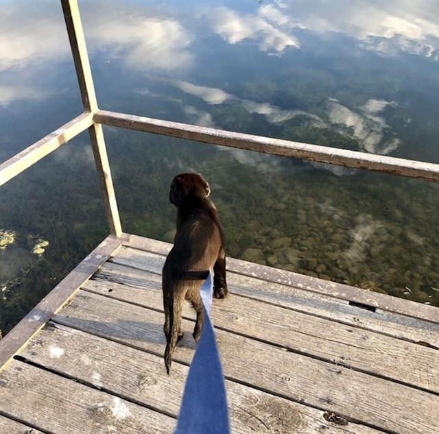 Čini se kao da pas stoji na nečem visokom, ali je zapravo ispod njega ribnjak