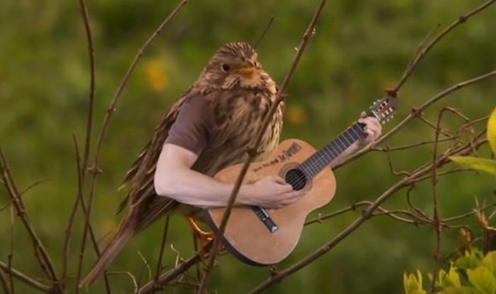 Ovaj urnebesni video ptica s ljudskim rukama jednostavno morate vidjeti