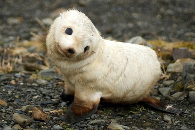 Beba tuljana znatiželjno promatra svijet oko sebe
