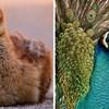 Evo kako 12 poznatih ptica izgledaju kao bebe i kako kada odrastu