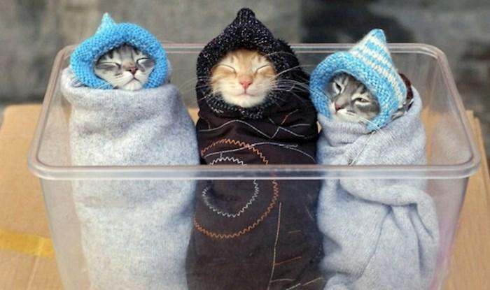 Ljudi su objavili preslatke fotke svojih maca koje će vas jednostavno rastopiti