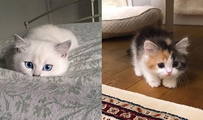 Preslatke mace koje su ugledale slasni zalogaj