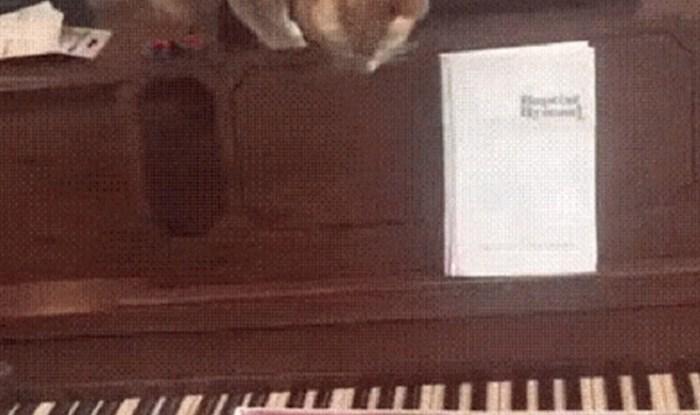 Mačka je dotakla tipke na klaviru, njena reakcija je urnebesna