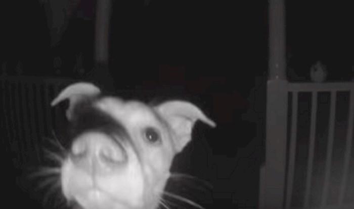 Ovaj pas nije mogao ući u kuću svojih vlasnika, nevjerojatno je što je zatim učinio