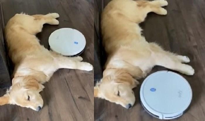 VIDEO Ovaj pas nije dozvolio robotskom usisavaču da mu pokvari popodnevni spavanac