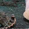 VIDEO Hobotnica uselila se u odbačenu plastičnu čašu. Pogledajte kako su je ronioci nagovorili da se preseli u školjku
