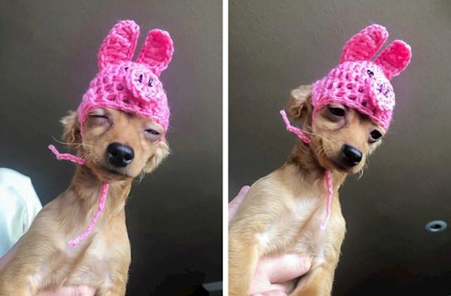 """""""Mama mi je poslala fotku njenog psa s kapicom koju mu je izradila"""""""