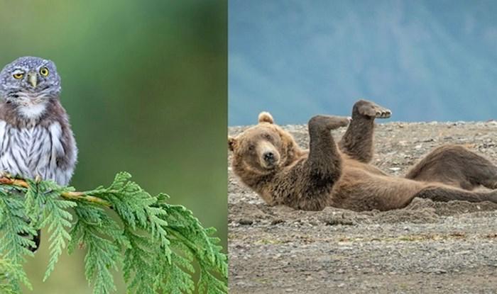 Najbolje smiješne fotke divljih životinja s istoimenog natjecanja