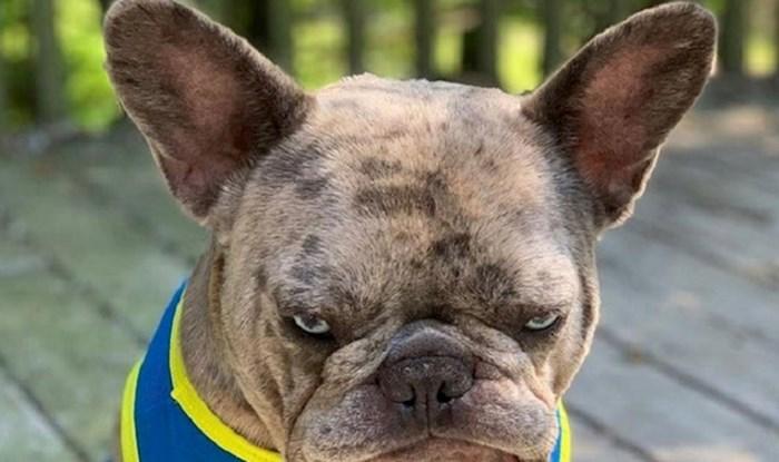 Ovom psu njegovi vlasnici idu jako na živce, njegov izraz lica sve govori