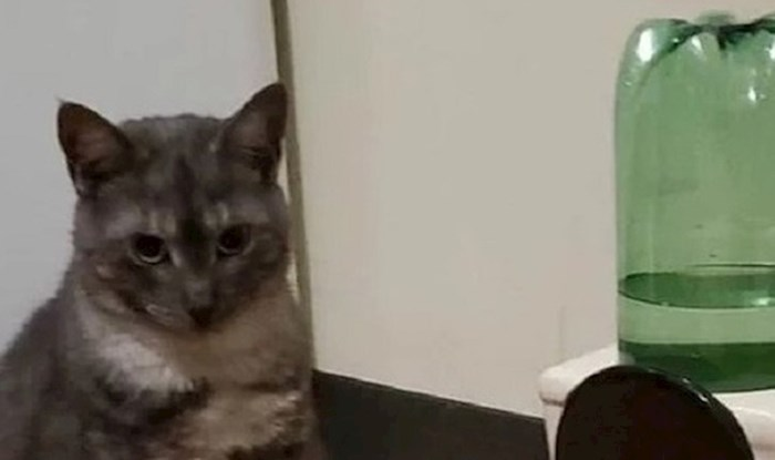 Mačka je uporno pila vodu iz wc školjke, pa su se vlasnici dosjetili genijalne ideje