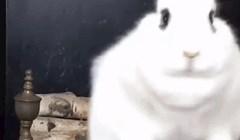 Ovaj siroti zeko koji pokušava dohvatiti hranu je nešto najslađe što ćete danas vidjeti