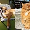 Ljubimci koje su vlasnici uhvatili kako uživaju u sunčanju