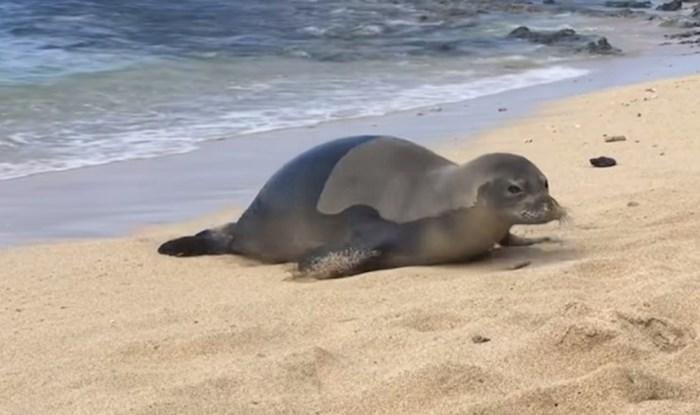VIDEO Lik zurio u tuljana, ovaj mu pokazao što misli o tome i ispustio vjetar