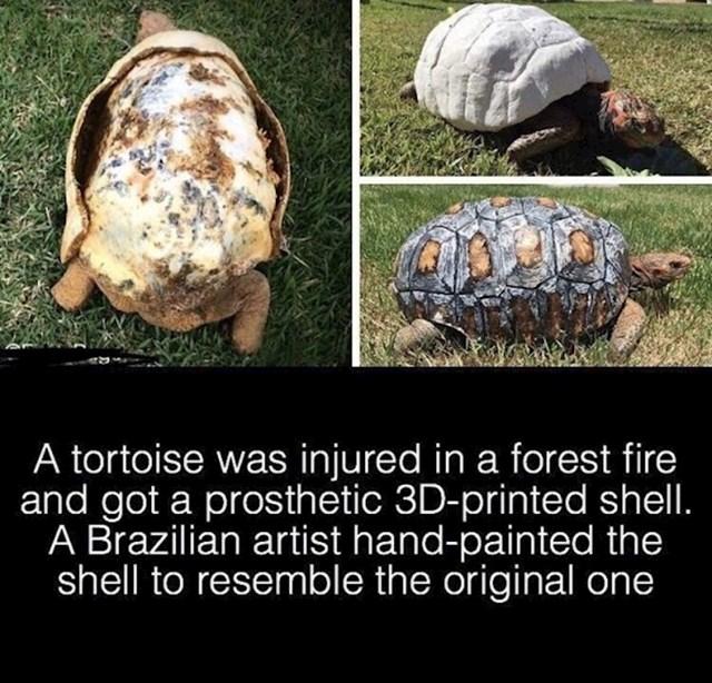 Kornjača je dobila novi umjetni oklop. Ozlijeđena je u šumskom požaru, a novi joj je ručno oslikao Brazilski umjetnik