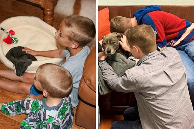 """""""Prvi i zadnji susret s našim psom Blutom, od prve do zadnje slike prošlo je 15 godina"""""""
